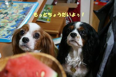 2009/08/19 その4