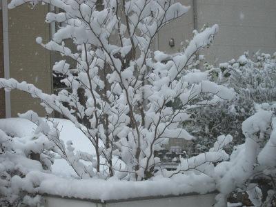 20120312_春の雪