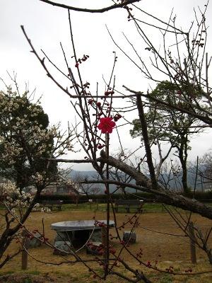 20120318_うめ2