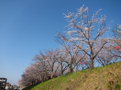 20120413_桜のトンネル5