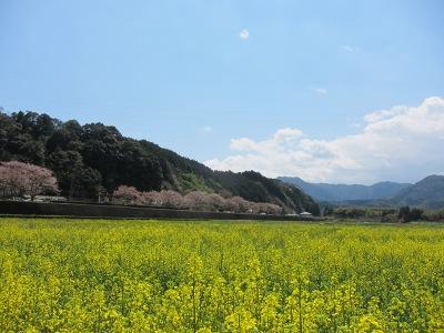 20120414_無人駅の桜1