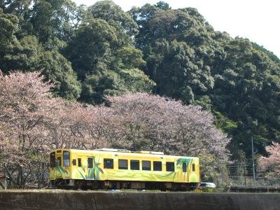 20120414_無人駅の桜10