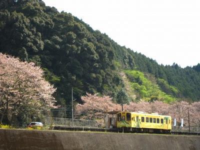 20120414_無人駅の桜11