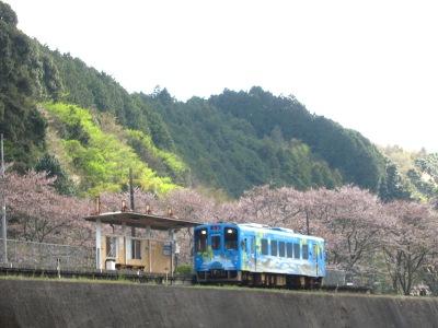 20120414_無人駅の桜15