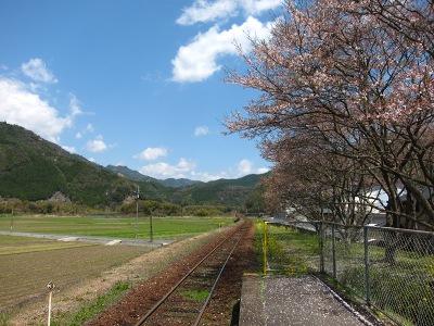 20120414_無人駅の桜3