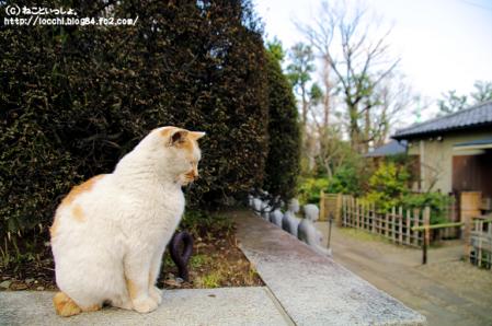 護国寺の猫。