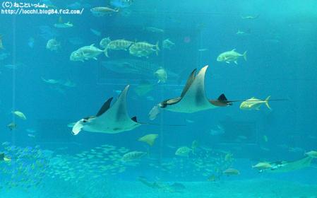 美ら海水族館⑤