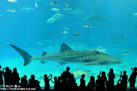 美ら海水族館④