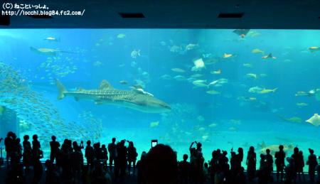 美ら海水族館③