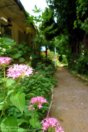 備瀬のフクギ並木と花