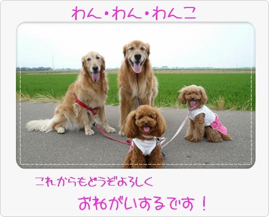 6,13お散歩16