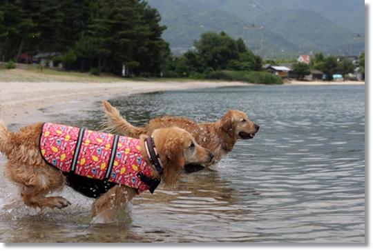 6,16琵琶湖4