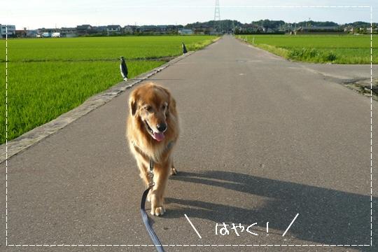 6,21お散歩2
