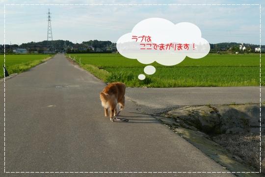 6,21お散歩3