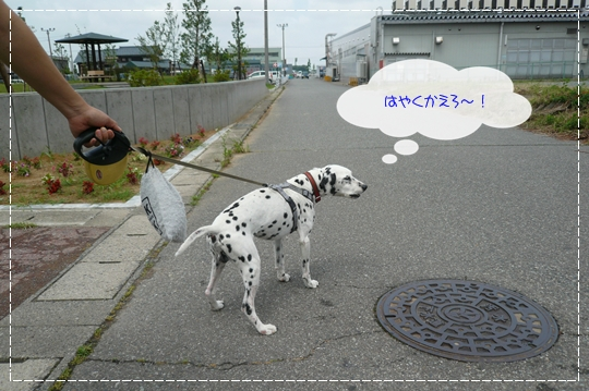 6,23お散歩3