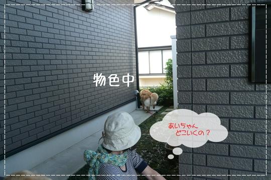 6,24お散歩5