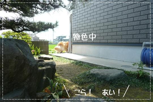 6,24お散歩6