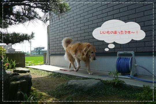 6,24お散歩7