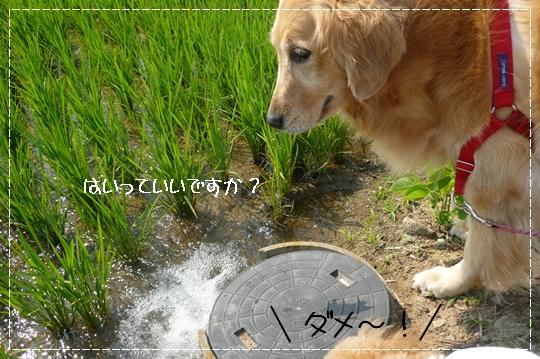 6,26お散歩4
