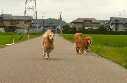 7,2お散歩1
