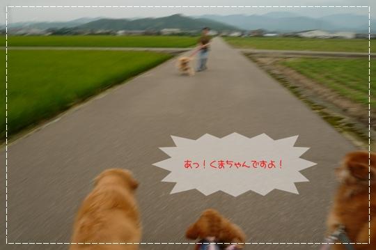 7,3お散歩2