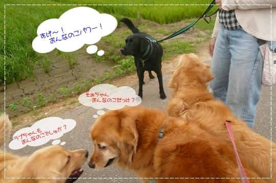 7,3お散歩8