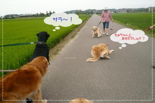 7,3お散歩11