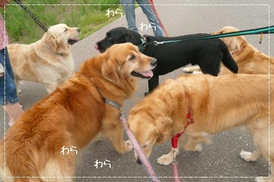 7,3お散歩13