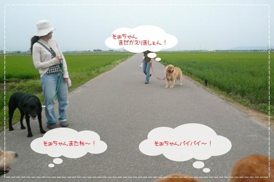 7,3お散歩16
