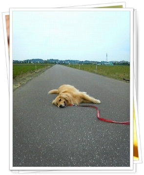 7,3お散歩17