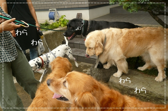 7,6お散歩2