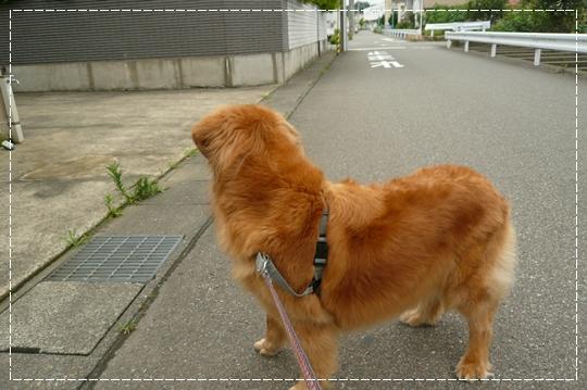 7,8お散歩1