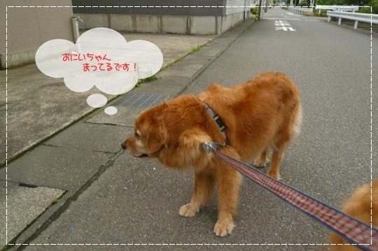 7,8お散歩2