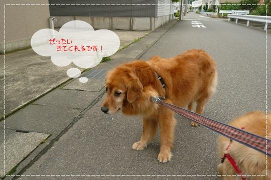 7,8お散歩3