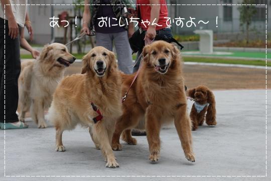 7,8お散歩8