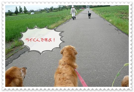 7,13お散歩8