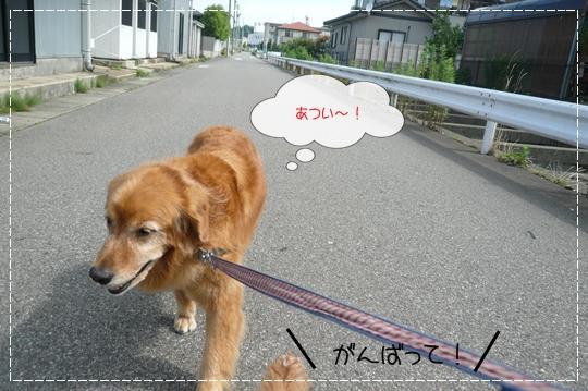 7,14お散歩3