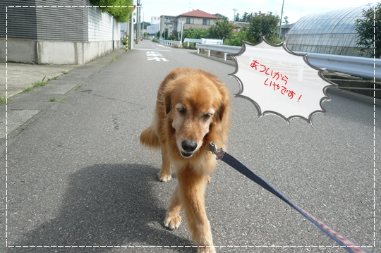 7,14お散歩2
