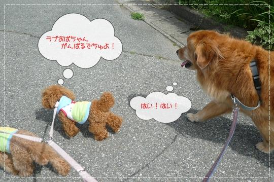 7,14お散歩7