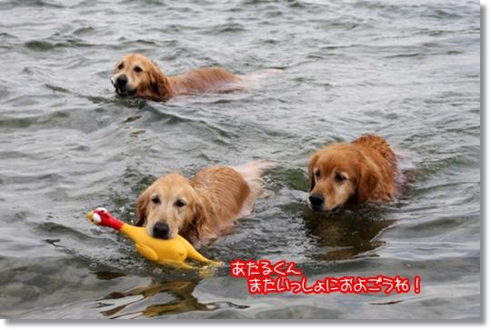 7,20琵琶湖16
