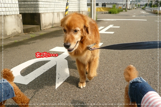 7,21お散歩1