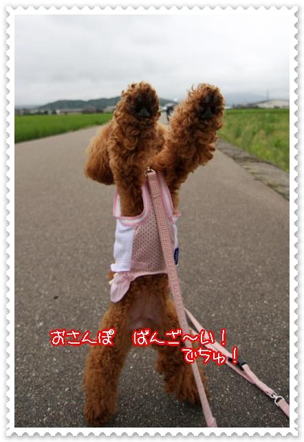 7,24お散歩9