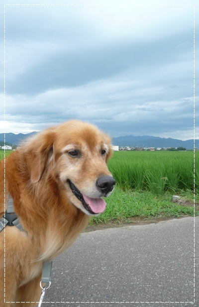 7,25お散歩2