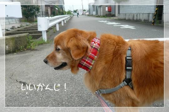 7,29お散歩5