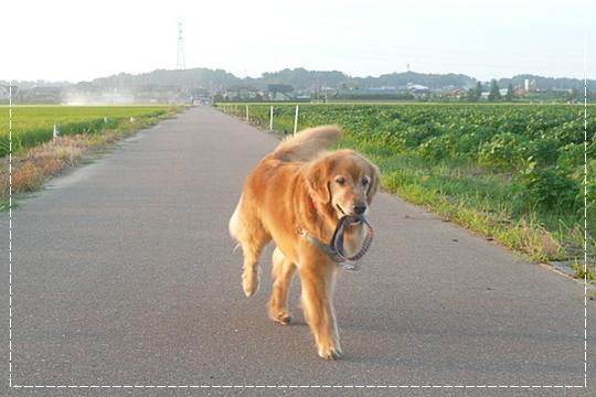 8,8お散歩6