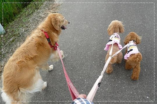 8,11お散歩6