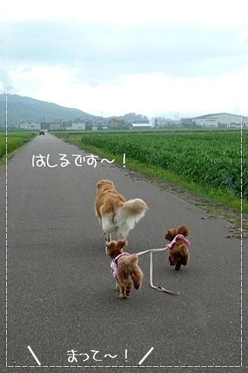 8,11お散歩7