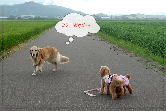 8,11お散歩8