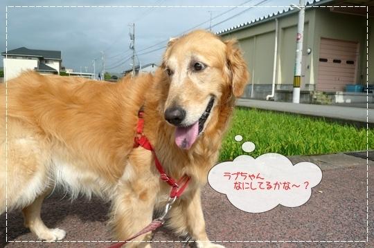 8,11お散歩10