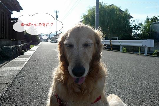 8,12お散歩5